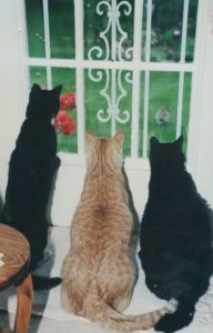 pet loss support group class-image of 3 cats looking out window