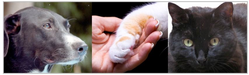 Teresa Wagner pet loss grief support. Image dog, cat paw in hand, cat