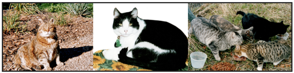 Healing pet loss workshop-image tiger cat, black and white cat, feral cats