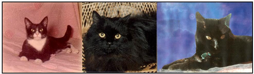 3 black cats