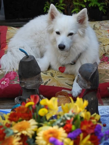 Healing pet loss workshop-image copyright Chrisopher Barret-White dog at altar with flowers