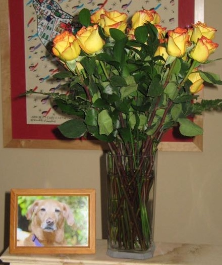 pet loss during holidays-Roses to honor a dog who transitioned