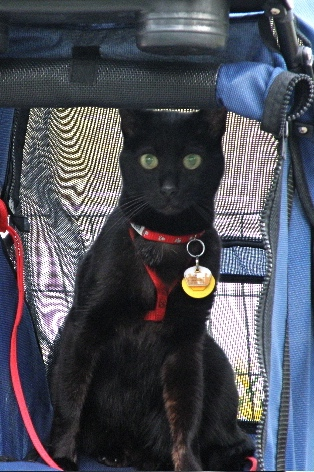 Animal hospice-Black cat in stroller