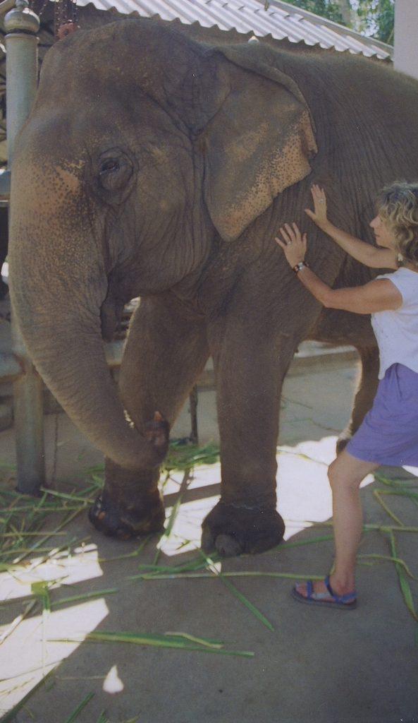 Elke Riesterer healing elephant