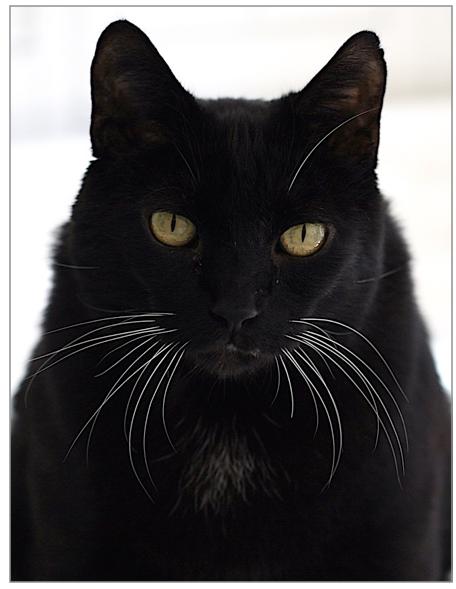 EFT for Pet Loss-Image of Black cat