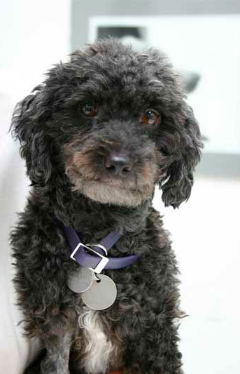 Counseling Skills for pet loss-image Black do Kai, beloved dog of Ruth Martin
