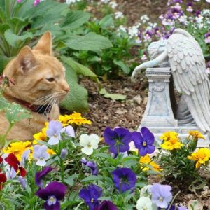 pet loss grief counseling-Lily the cat at grave