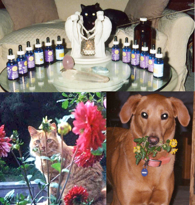 Flower essences to heal pet loss. Image-Cats and dog with flowers and essences