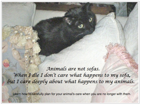 Animals Grieve Too; image of Cat on sofa