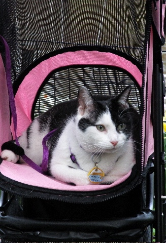 animals grieve too-cat in stroller