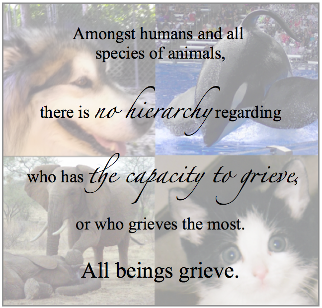 Animals Grieve Too; image of dog, cat, whale, elephant