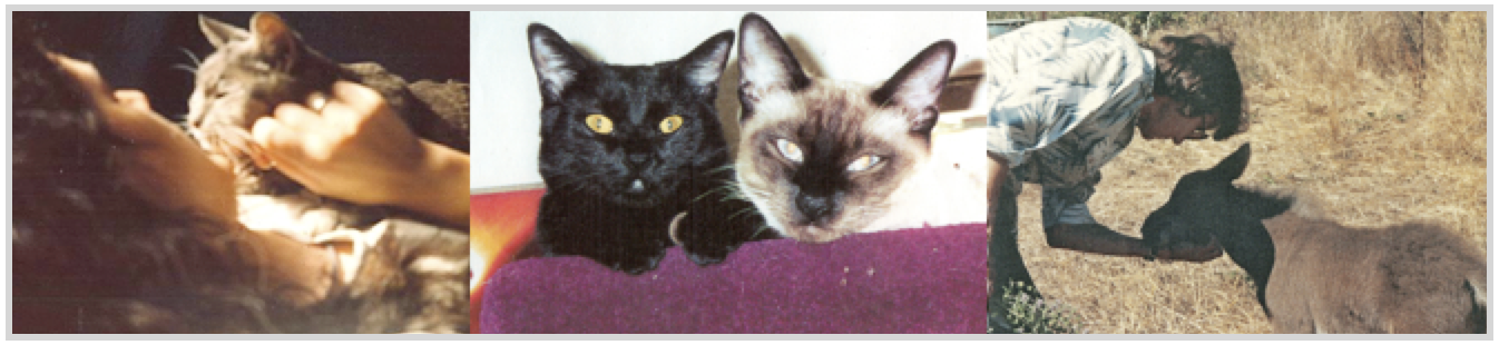 pet loss grief support classes-cats and donkey